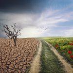 COPAGRI: Food System Summit, più agricoltura contro il climate change